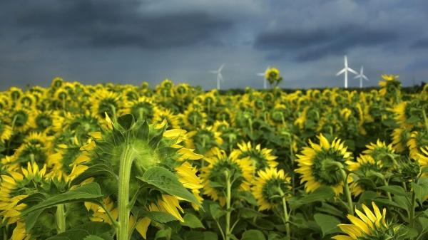 Green Deal moet boeren aan duurzaam inkomen helpen