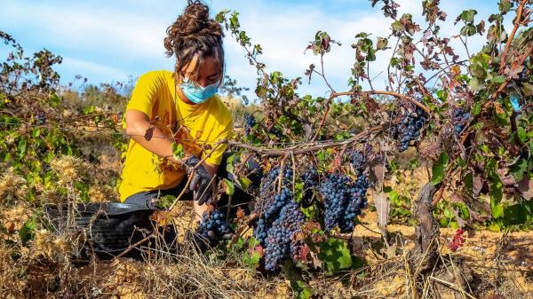 Bodegas Neleman: Good wine to save the World
