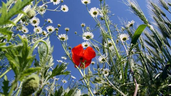 Wereldmilieudag 2020 heeft als thema biodiversiteit