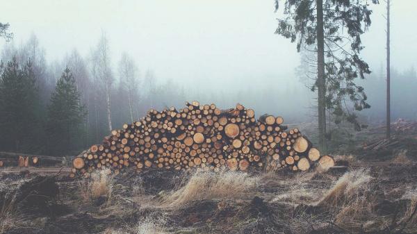 Nederland in top 5 EU-landen met meeste import producten gelinkt aan ontbossing